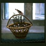 fixe-oiseau-fenetre-volets-a93ba8c